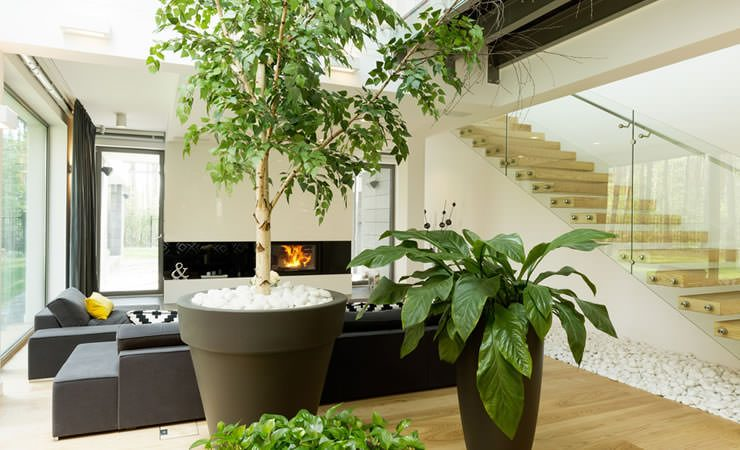 Plantas que devemos ter por número da casa