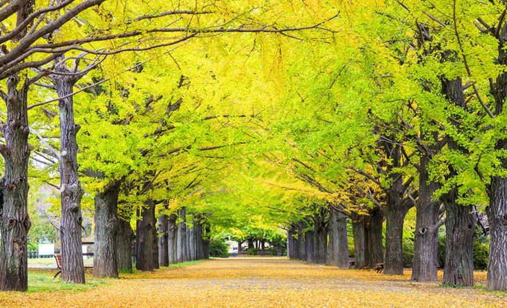 Conheça 7 tipos de árvore com poder de cura