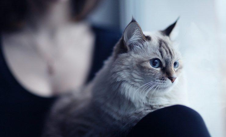 Gatos, seres místicos e nossos protetores espirituais