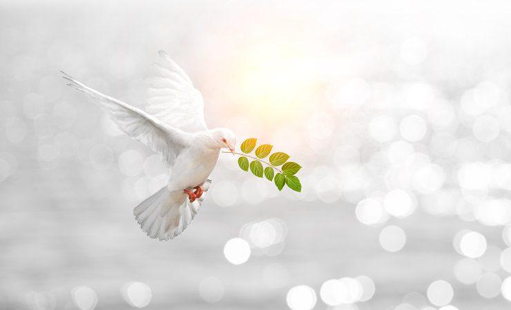 Hoje é Dia Internacional da Paz e um ritual especial para atrair a paz familiar