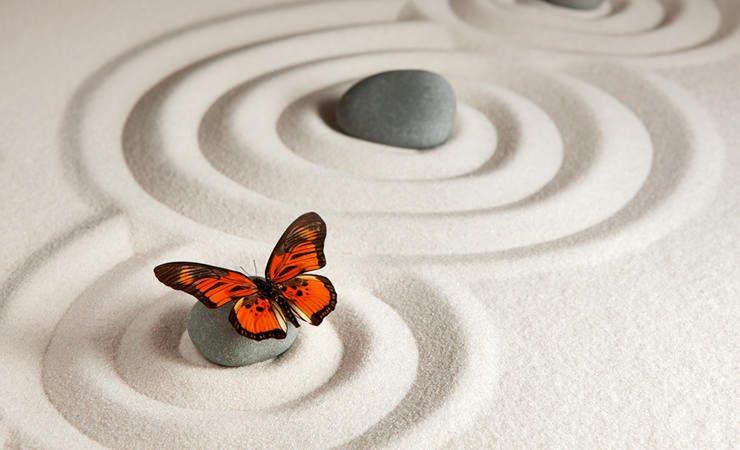 Os insetos e a espiritualidade